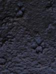 canine tracks