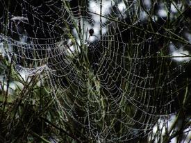 spider web 1 (1)