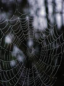spider web 1(5)