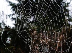 spider web  (5)
