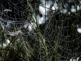 spider web  (6)